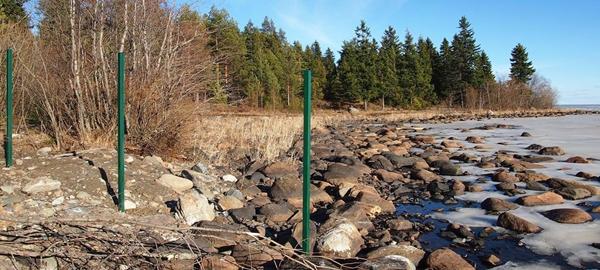 Забор, отгораживающий вырубку городских лесов у Онежского озера