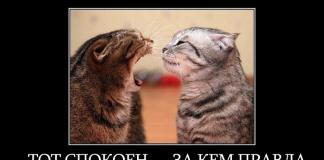 Тот спокоен — за кем правда: мотиватор с двумя котами