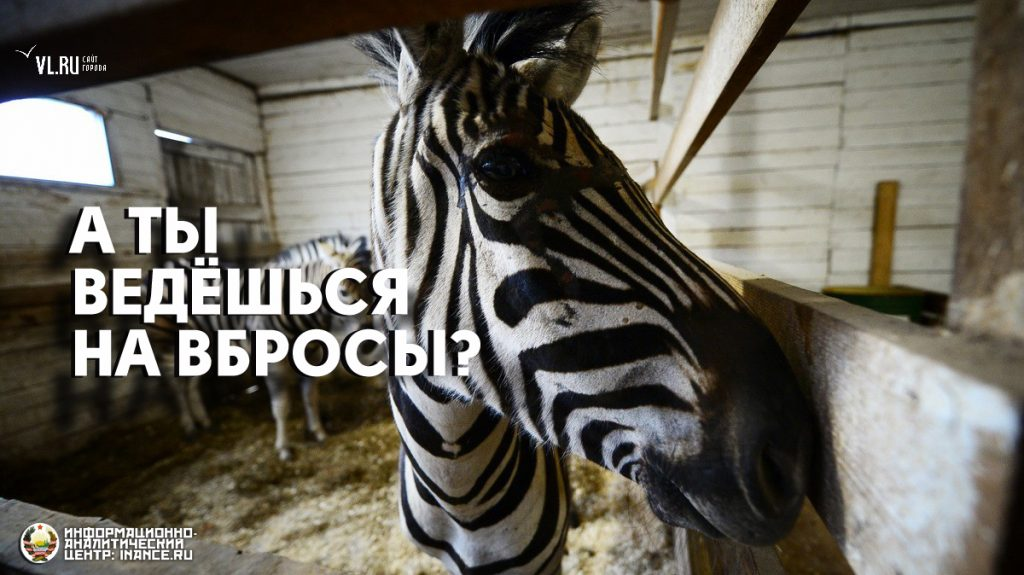 public-zebra-propaganda