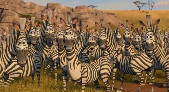 public_zebra_04_zebri