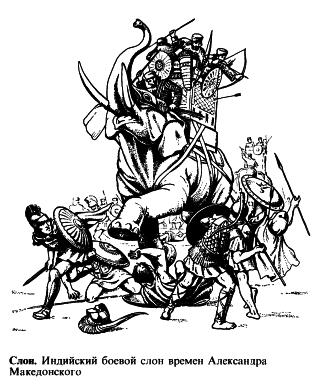 Индийский боевой слон времён Александра Македонского (Словарь античности)