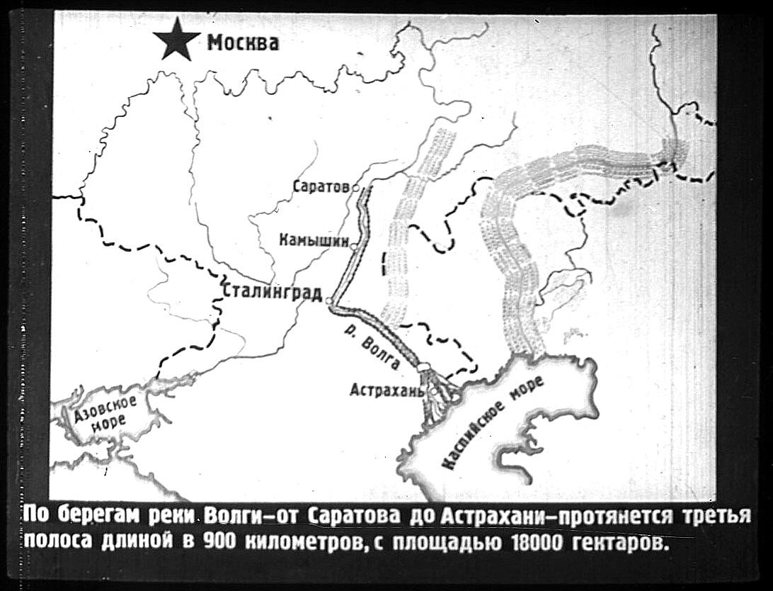 Проект лесополосы по берегам Волги