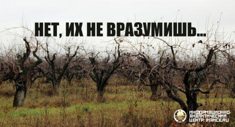 public-yabloko